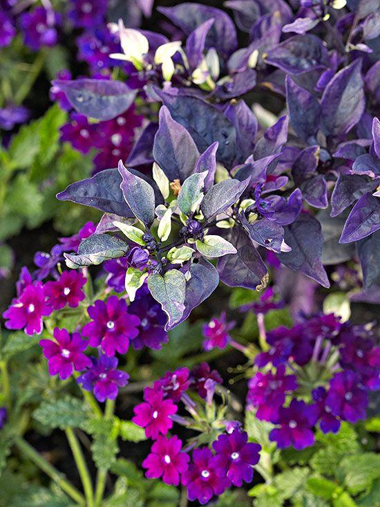 Best Purple Flowers for Your Garden