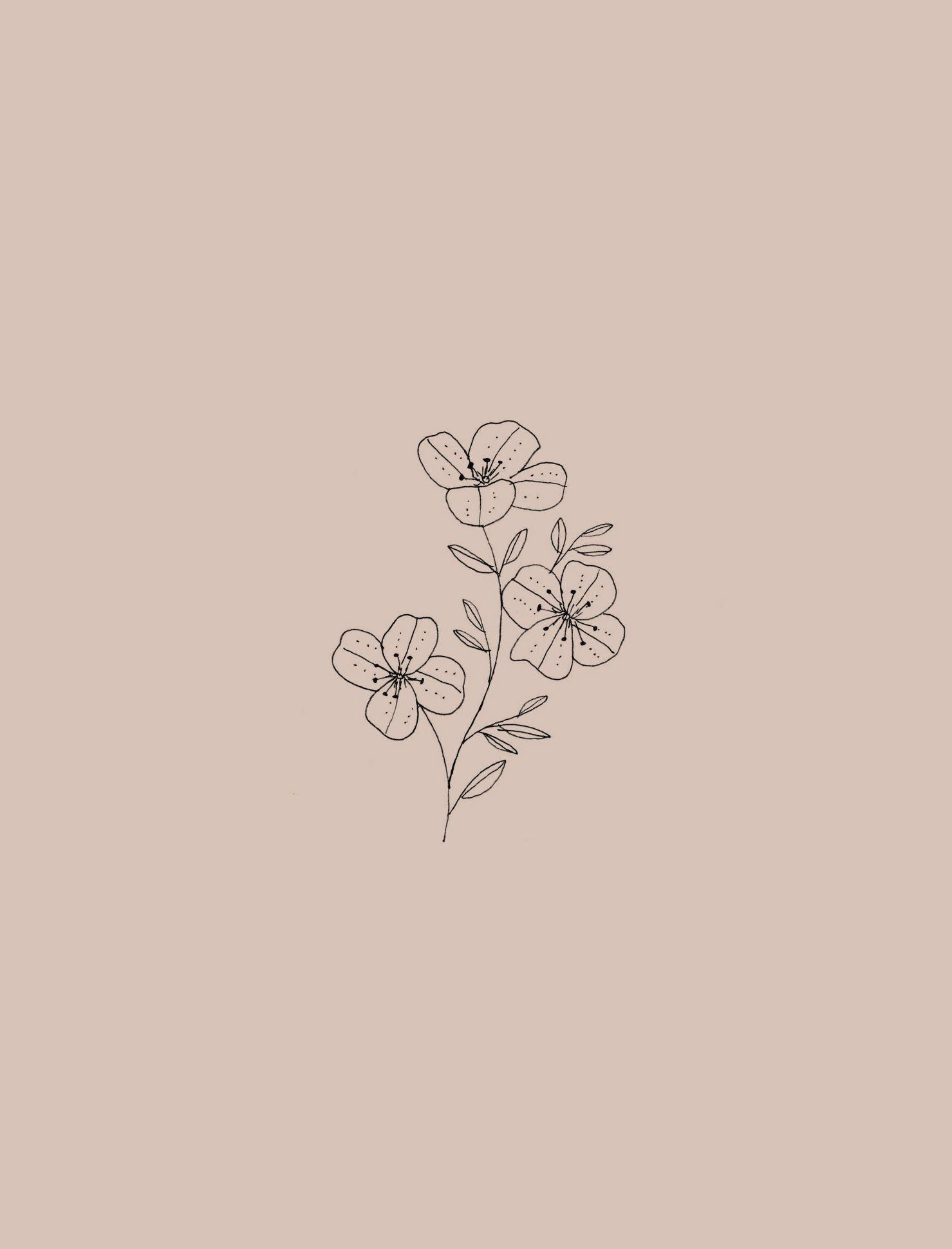 Botanical Illustration Botanical Illustration Minimalist Drawing Minimalist Wallpaper