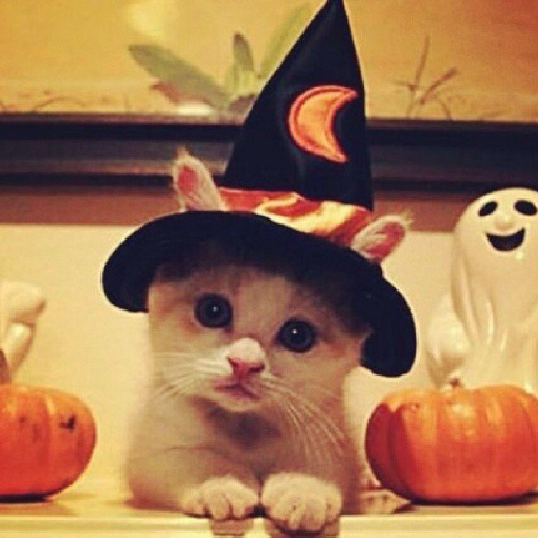 Cute Halloween Decorations Pinterest: Happy Halloween!