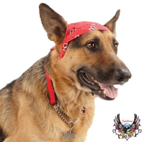 Bret Michaels Pets Rock Collection Pets Rock Pet Costumes Bret