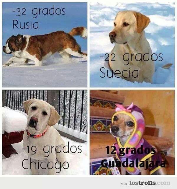 Jajaja Frio De Perros Perro Gato Mascotas