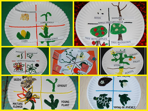 Clip Art Pumpkin Life Cycle Color 50017 additionally Acorn To Oak Tree Life Cycle In 8 Steps 11096926 also Parts Of A Tree Worksheet 2750754 also Plant Growth Worksheets For Kindergarten furthermore T T 28937 Life Cycle Of A Flower Cut And Paste Activity. on plant life cycle sequencing cards
