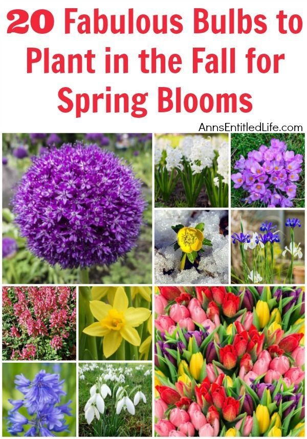 20 Fabulous Bulbs To Plant In The Fall For Spring Blooms When