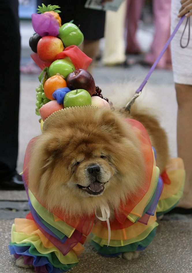 Pet Halloween Costume Roundup Pet Halloween Costumes Pet