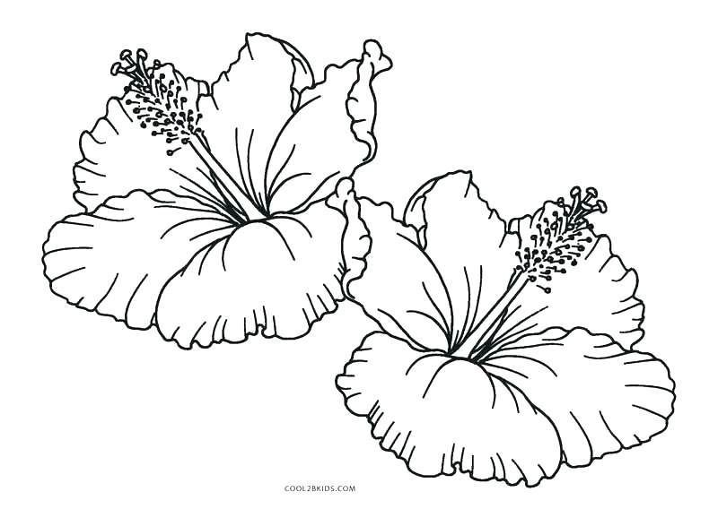 Printable Hibiscus Coloring Pages Printable Hibiscus Flower Coloring Printable Flower Coloring Pages Flower Coloring Pages Flower Printable
