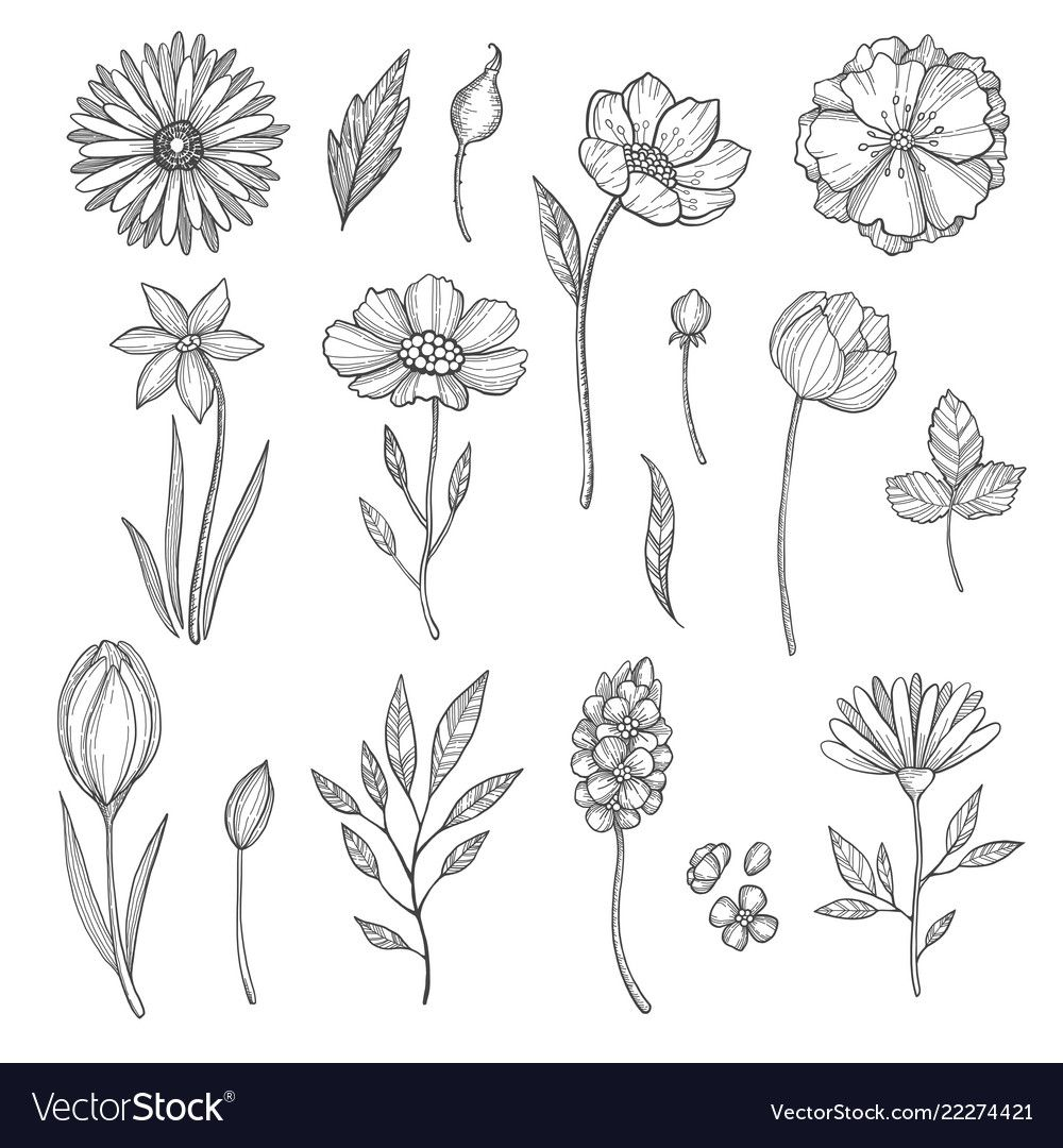 Hand Drawn Flowers Vector Various Pictures Of Plants Illustration Of Flower And Plant Floral Leaf Sketch Do In 2020 Flower Drawing Hand Drawn Flowers Leaves Sketch