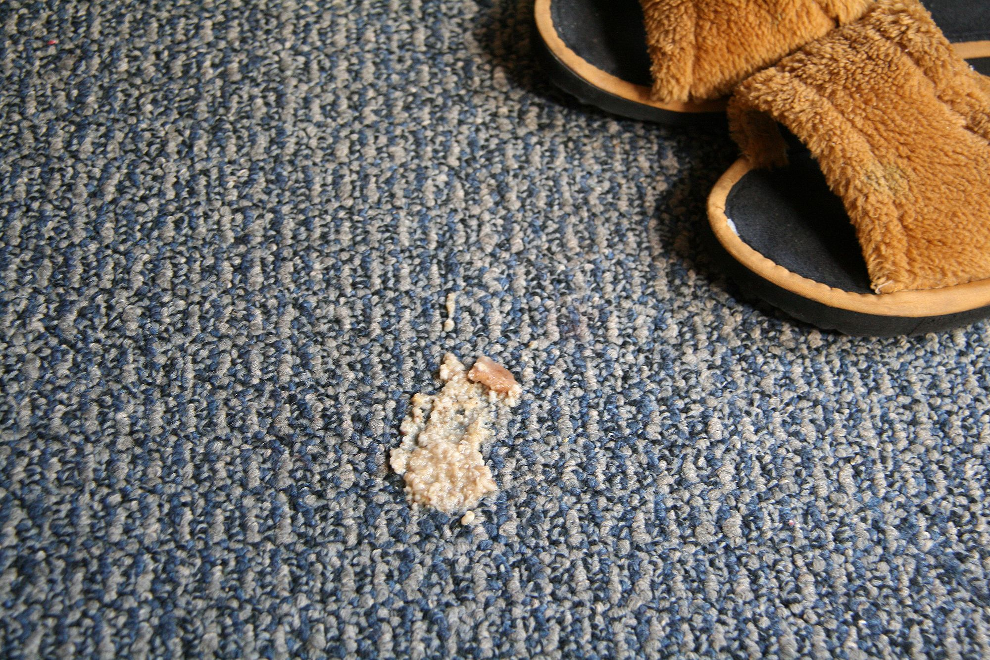 Clean pet vomit from carpet cleaning pets diy cleaning