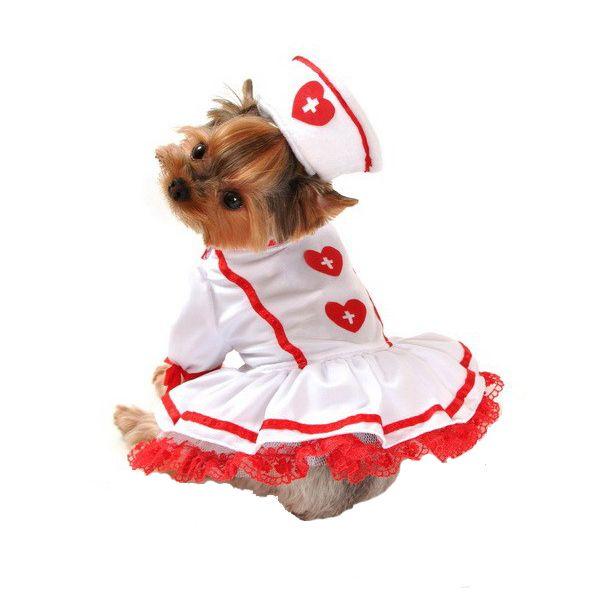 Cutie Nurse Halloween Dog Costume Dog Halloween Costumes Dog