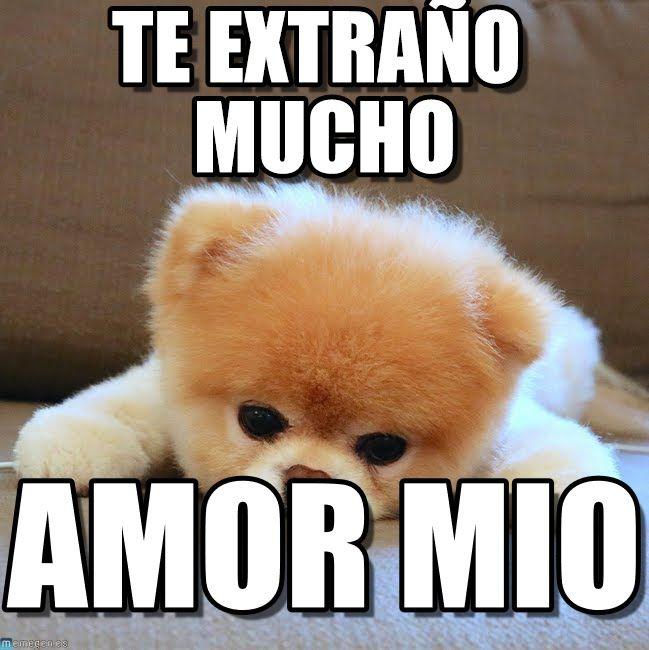 Image Result For Memes Te Extrano Fotografias De Amor Amor Memes Animales
