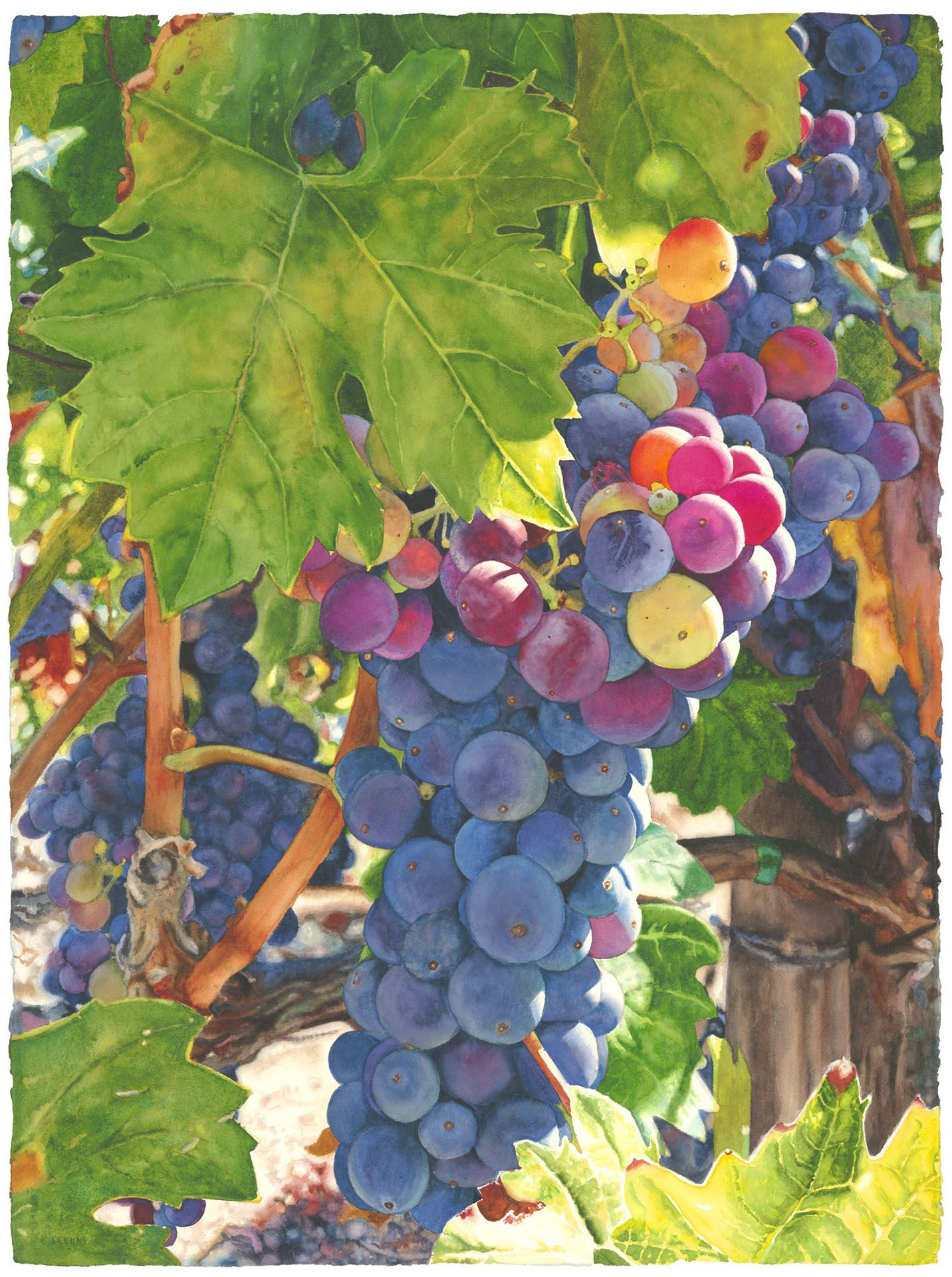 Grapes and wine cara brown life in full colorcara