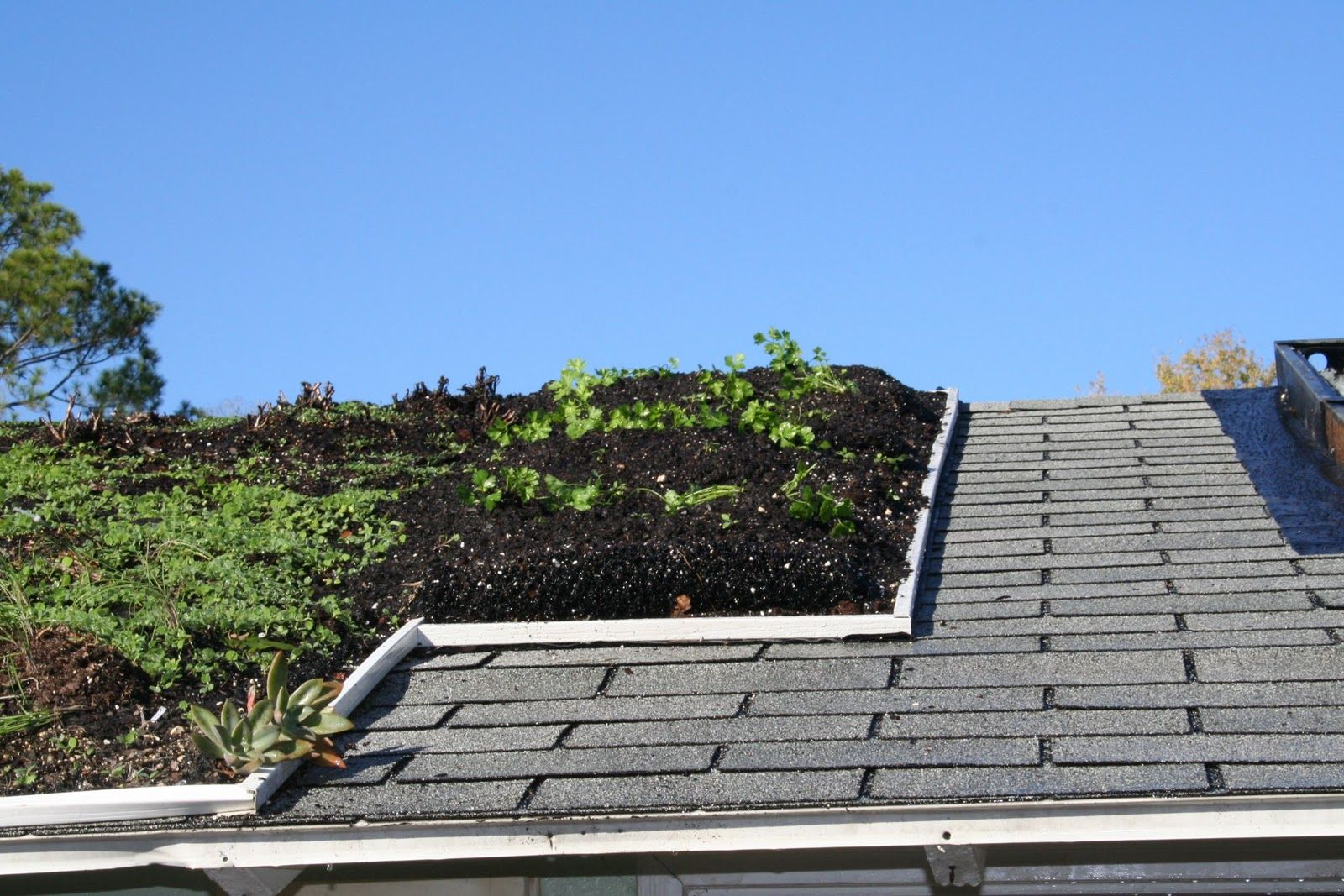 Rooftop Garden On Slanted Roof Google Search Rooftop Garden Urban Rooftop Garden Urban Garden
