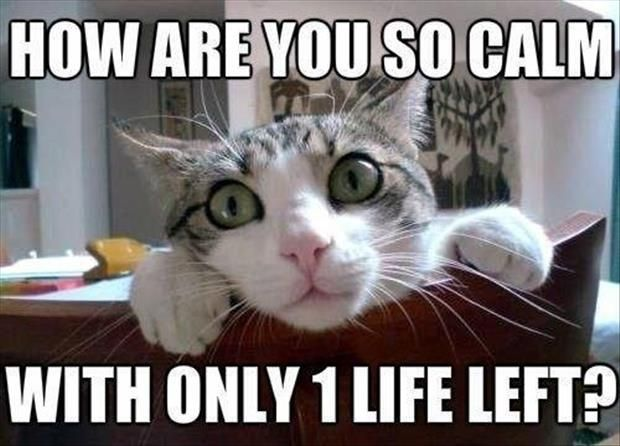 Funny Picture Dump Of The Day 59 Pics Funny Cat Memes Funny Pictures Funny Cats