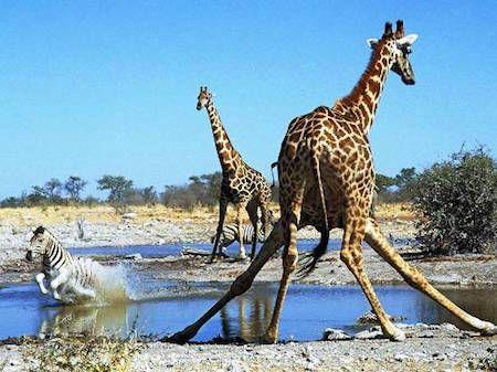 15 Fotos increibles De Animales En Acción