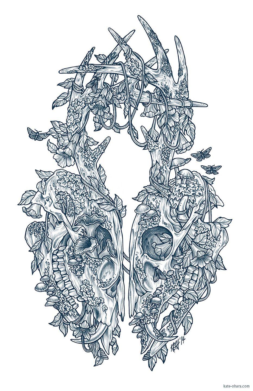 Lichen kate ouhara illustration kate ouhara pinterest