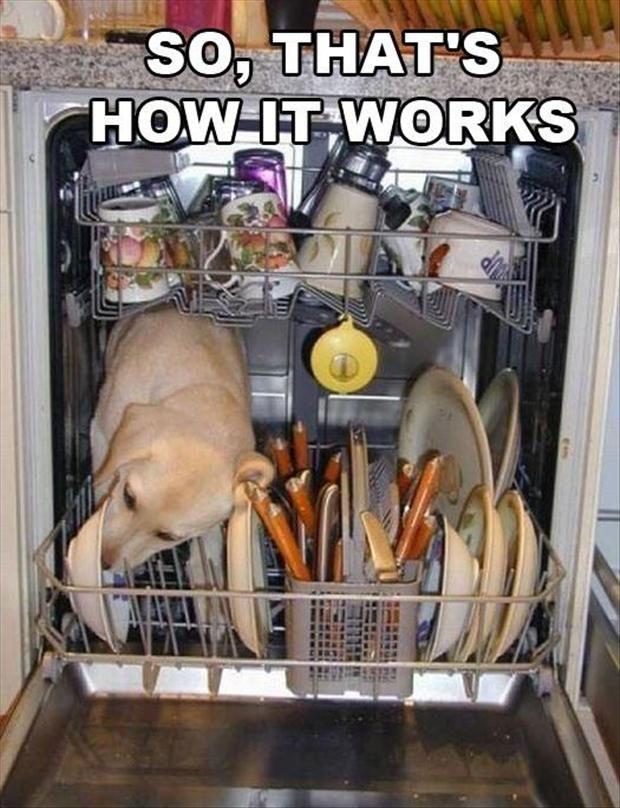Dog dishwasher - http://funnyout.com/dog-dishwasher/
