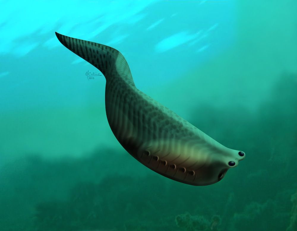 Tiny fish may be ancestor of nearly all living vertebrates for Are fish considered animals