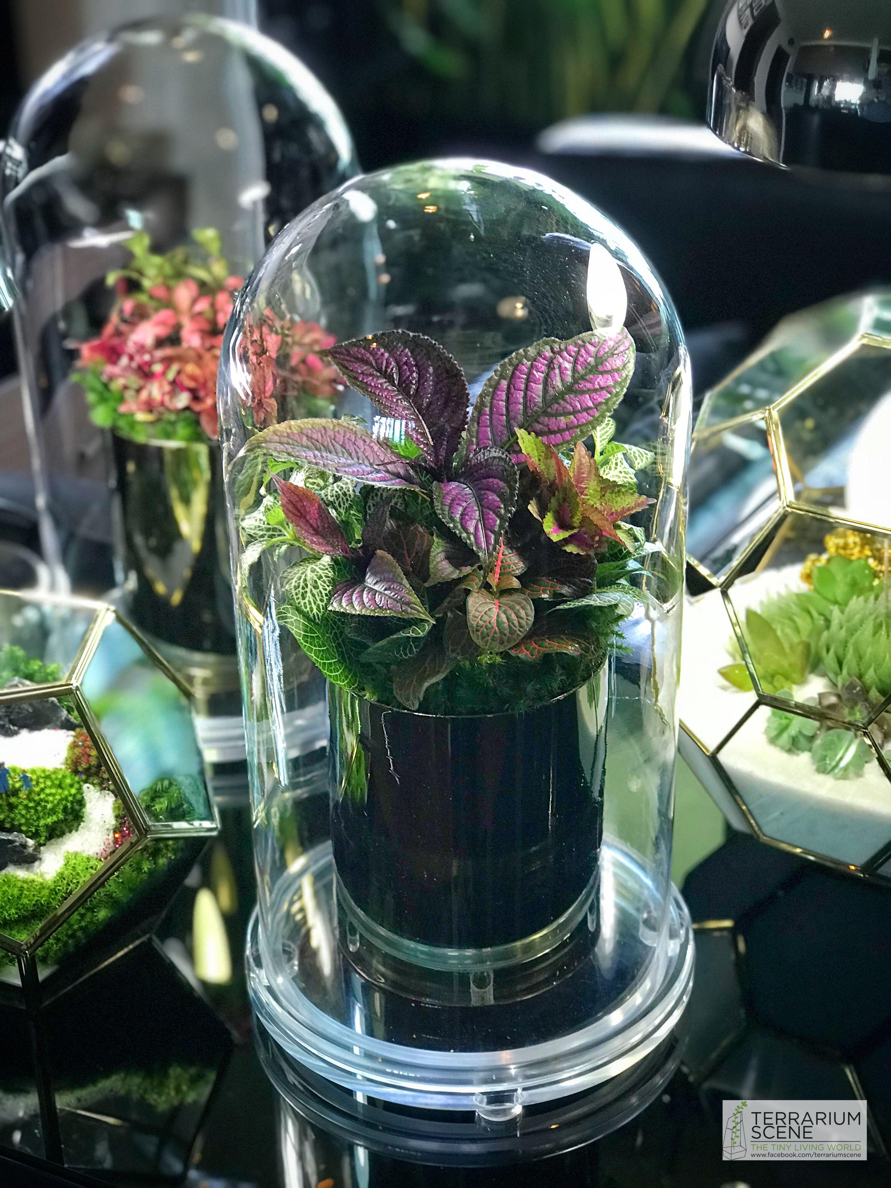 Terrarium Fermé Plante Grasse Épinglé par amarante boyer sur terrarium | terrarium