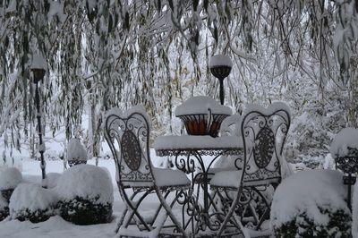 Winter unter der Trauerweide