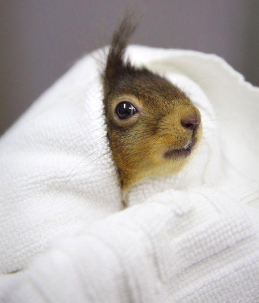 #cute #squirrel