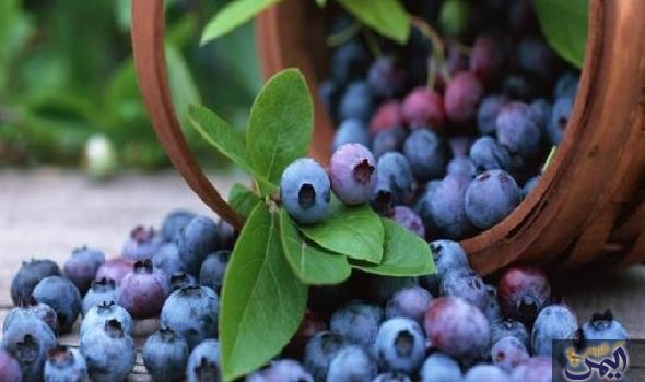 فوائد التوت الأزرق في تحسين أداء الذاكرة لدي الأطفال Anti Aging Food Blueberry Anti Aging Skin Products