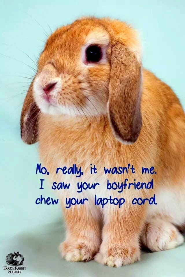 Funny Bunny Memes With Images Crazy Bunny Lady Funny Rabbit