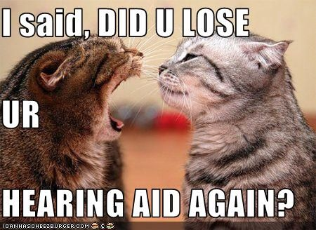 b3a9a9ec5564d07a1d8669fa7adcc27f understanding the sounds and body language of your cat cat, cat,Body Language Funny Memes