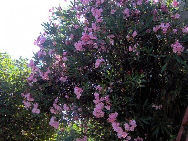 El jardín Sostenible que Cualquiera Puede TenerÁrboles y Arbustos