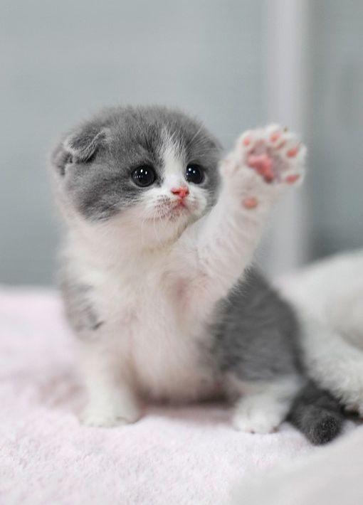 Cute Cats And Curious Cat With Cat Funny Gatos Bonitos Gatos