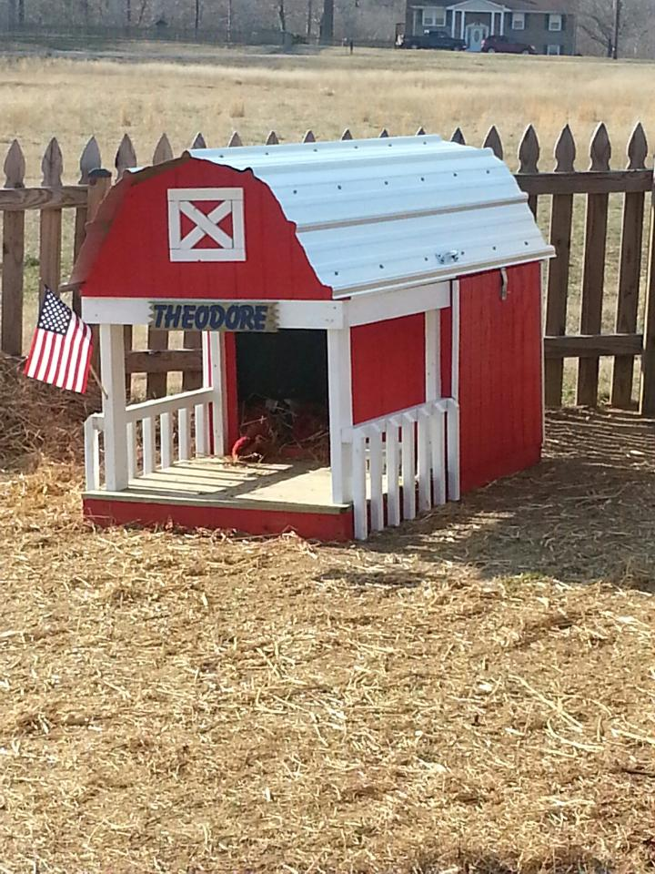 My daughter had a custom house built for her Kune Kune pig, …