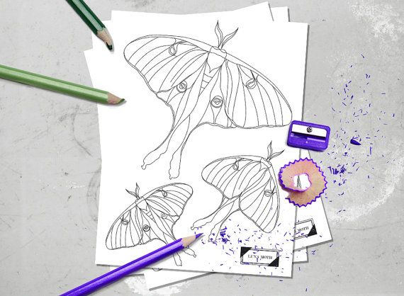 Printable Coloring Page Luna Moth Instant Downloadable Pdf