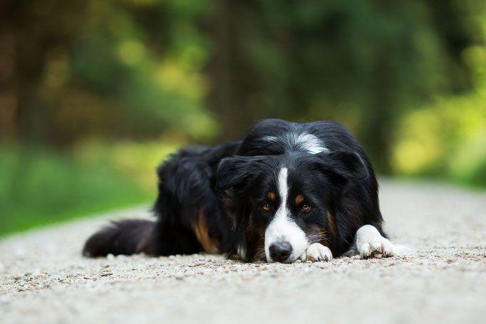 Hundefotografie Tipps & Tricks Hundefotografie