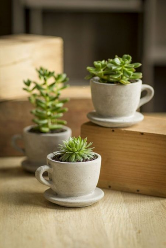 zoom tendance d co planter une plante dans une tasse belle cactus et caf. Black Bedroom Furniture Sets. Home Design Ideas