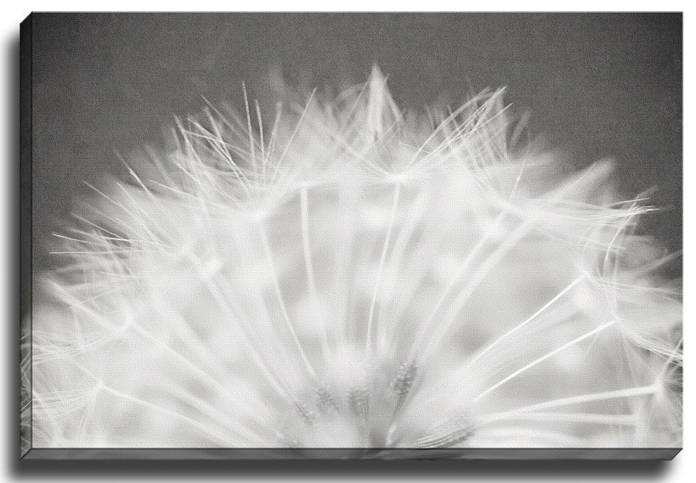 Minimalist Dandelion BW by Lisa Russo Photographic Print on Gallery Wrapped Canvas