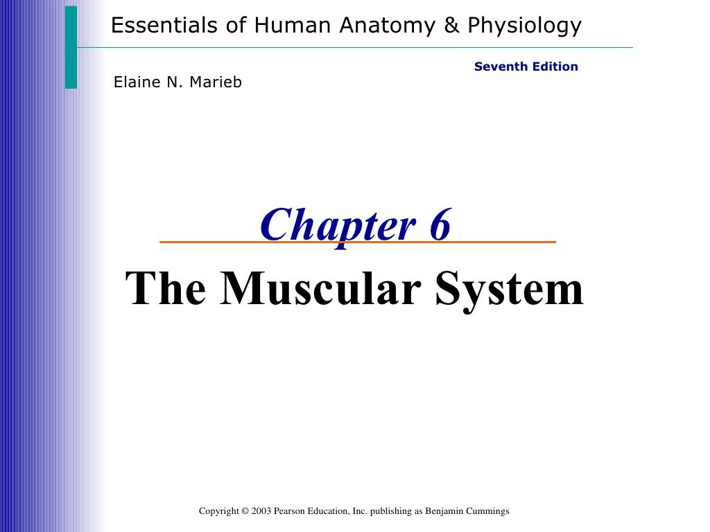 Muscle system by Lawrence James via slideshare   Anatomy and ...