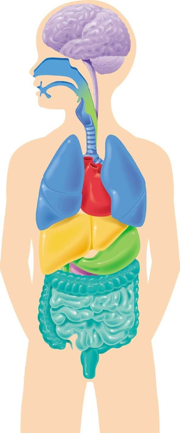 Interactive Human Body Anatomy Human Body Anatomy Human Body