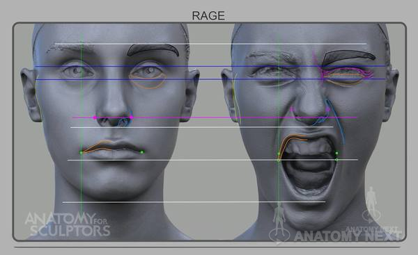 Anatomy Next Blog - Female Facial expressions - Smile & Rage