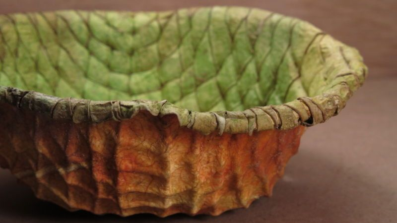 Dragon skin bowl made from a dried watermellon. IMG_6860.JPG