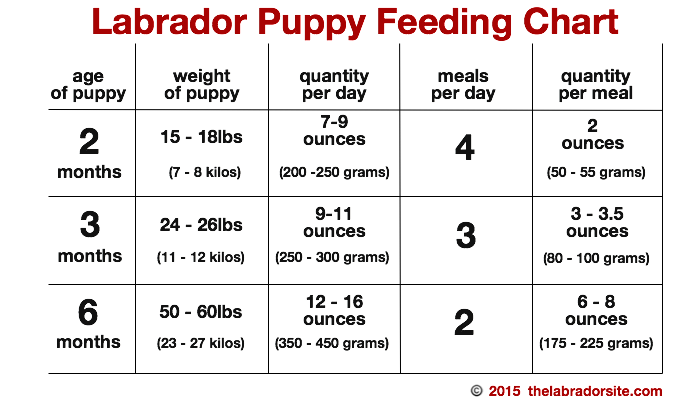 How Does Pedigree Dog Food Rate
