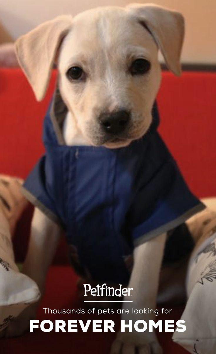 About Pet Adoption With Images Pet Adoption Pet Finder Dog