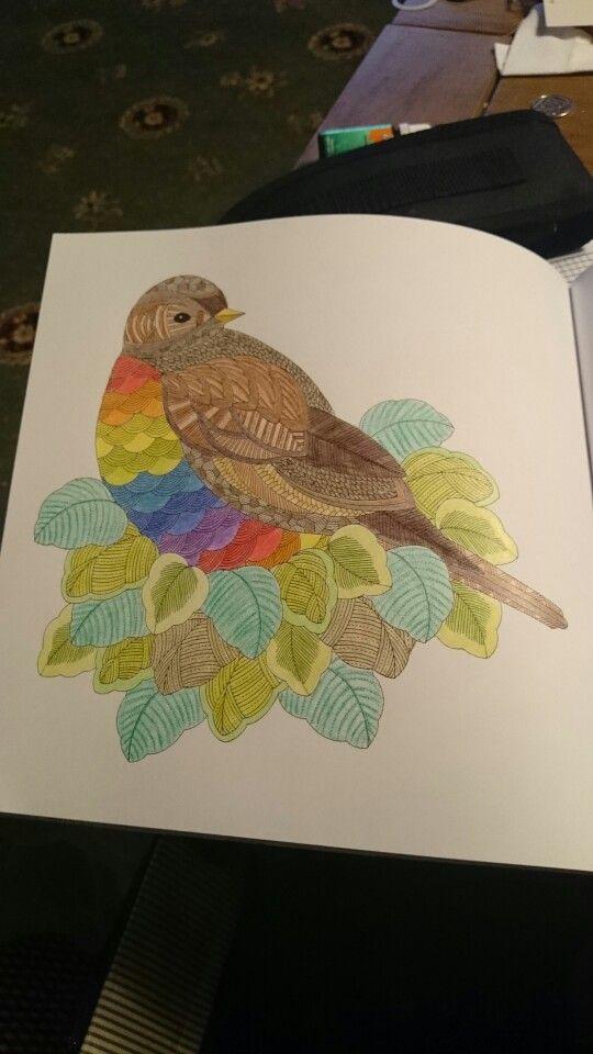 Millie Marotta Animal Kingdom Bird On A Leafy Nest