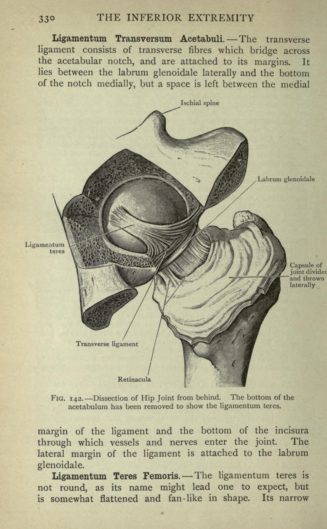Attractive Acetabular Labrum Anatomy Photos - Physiology Of Human ...