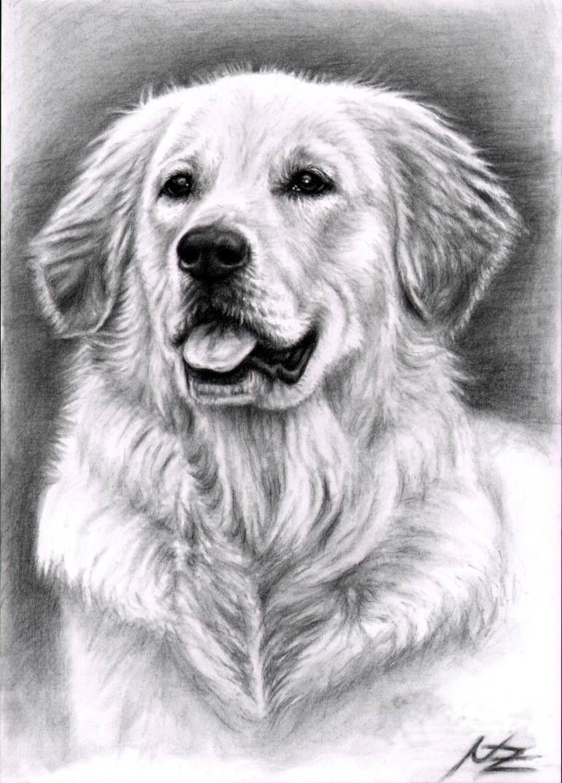 Nicole Zeug Golden Retriever Art Dog Art Dog Paintings [ 1073 x 770 Pixel ]
