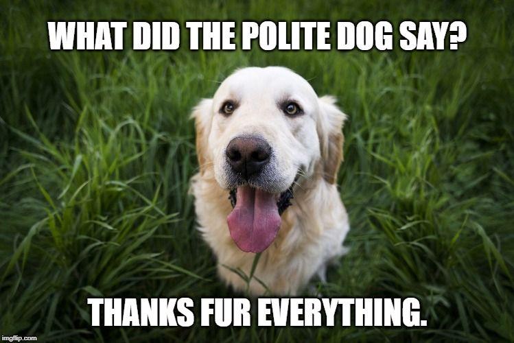Talking Dog Joke Dog Body Language Dog Puns Dog Jokes