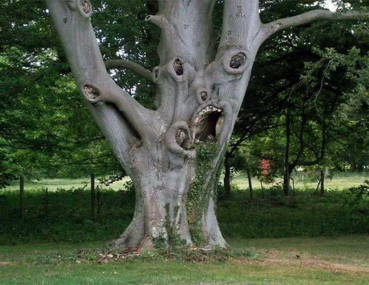 Природе фотошоп без надобности в 2020 г. | Деревянные лица ...