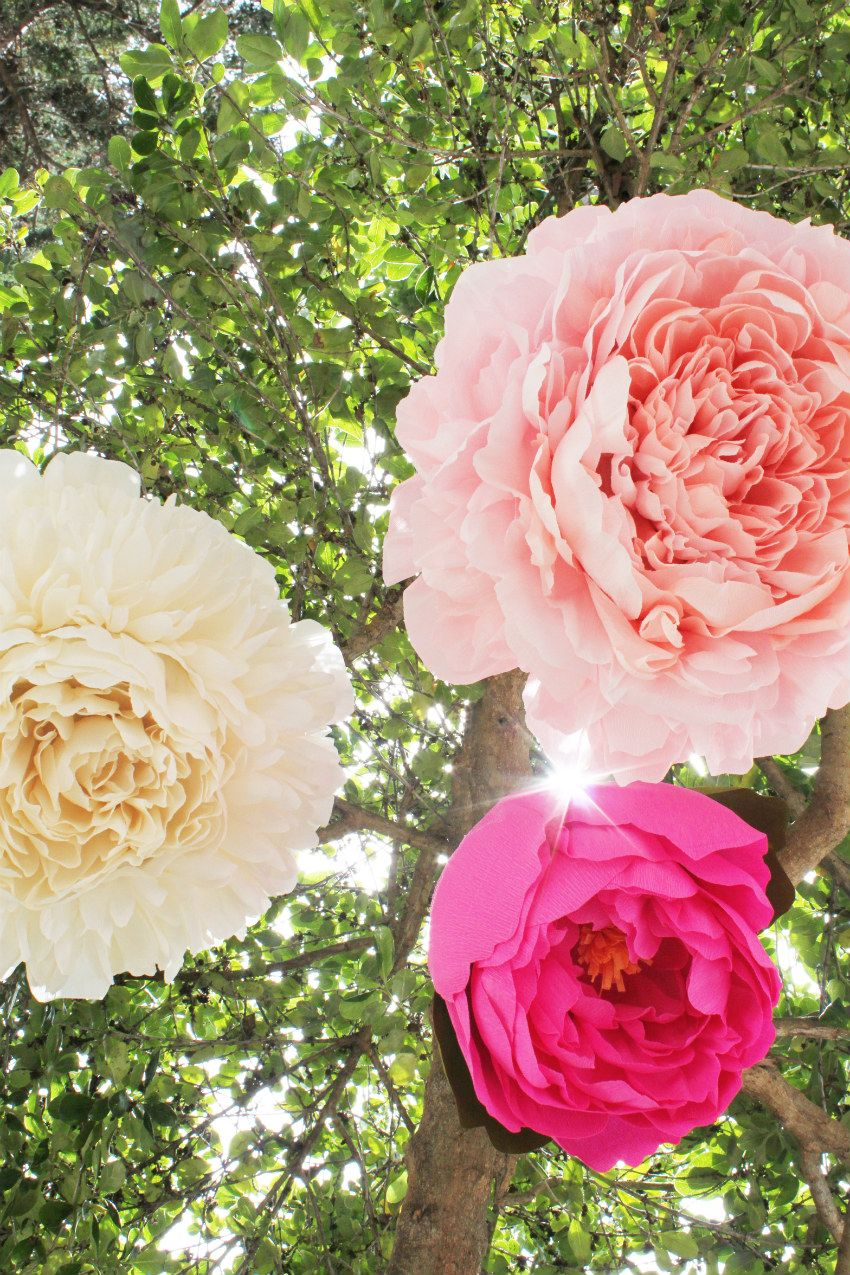 Large crepe paper peony tutorial  Craft Ideas  Pinterest  Flower
