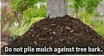 Much About Mulch