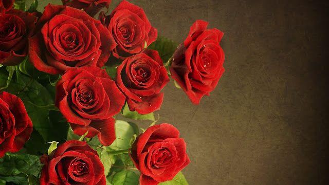 Pin On Rosa Damascena الورد الجوري