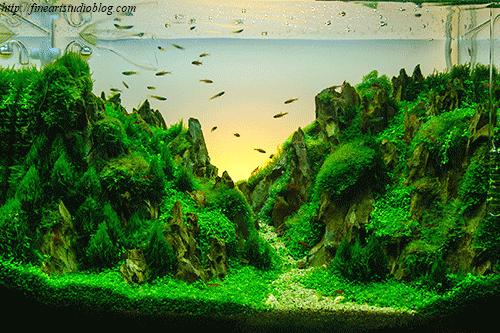 Pin On Fish Tanks Decor Ideas