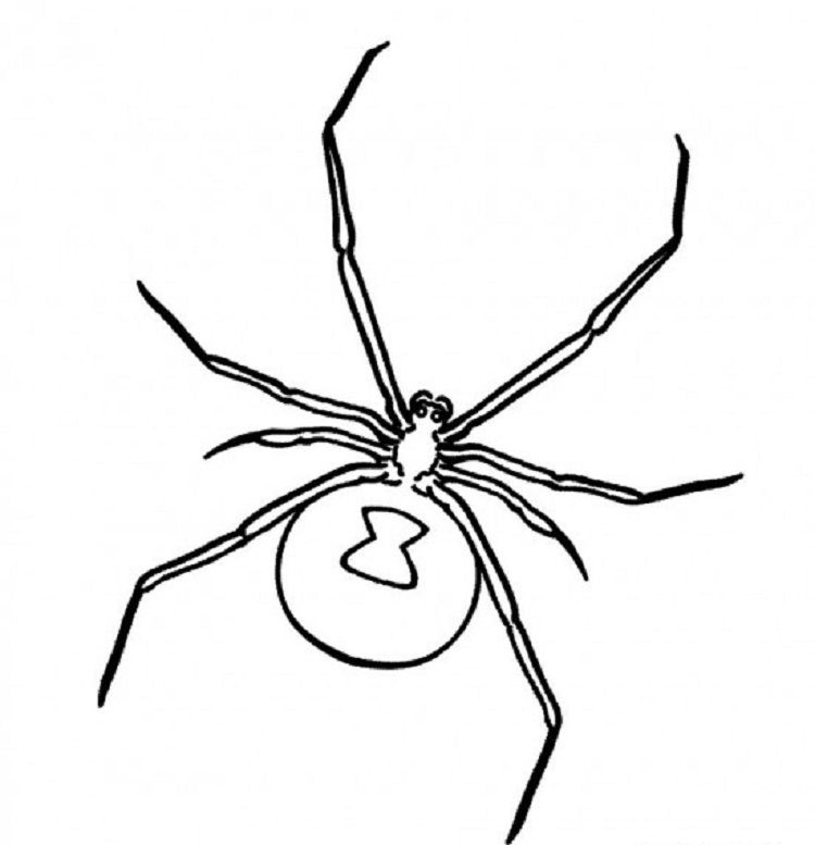 Black Widow Spider Coloring Pages Spider Coloring Page Black