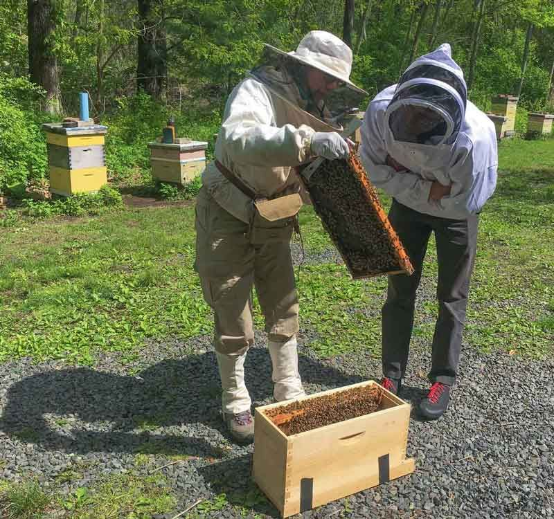 Showing the queen while transferring four frames to this beekeeper's transport nuc box.
